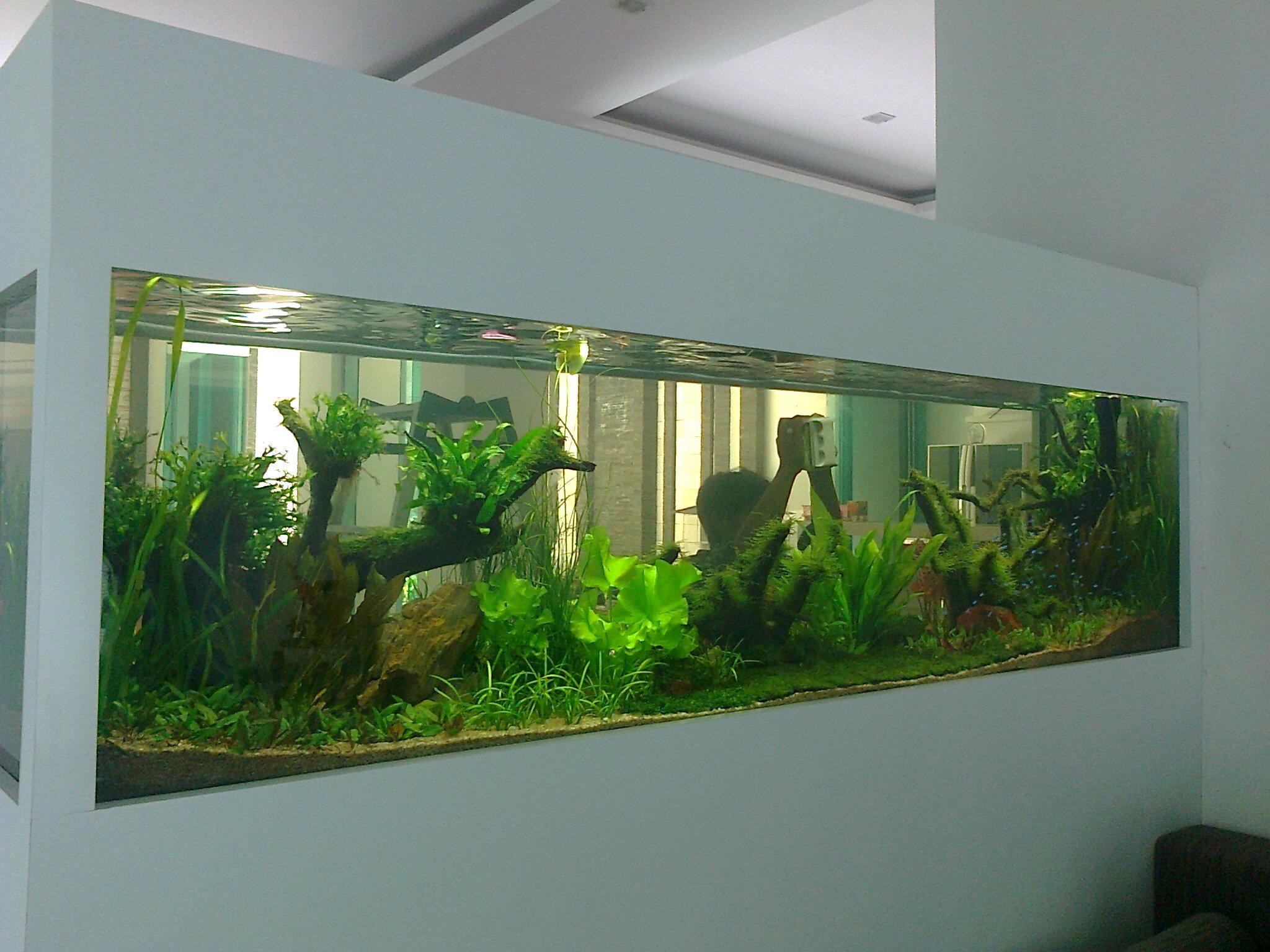 Aquarium Tempel Di Dinding
